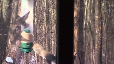 O esquilo que não sabia comer