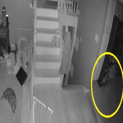 Câmera de segurança filma fantasma com um animal de estimação