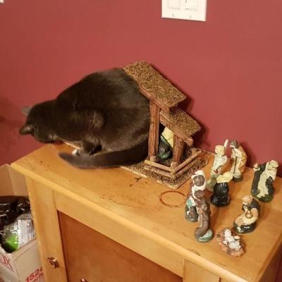 Gatos não sabem respeitar as manjedouras natalinas