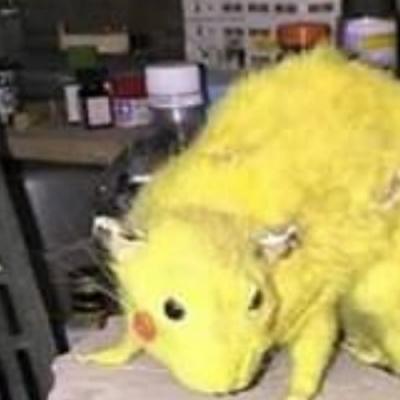 let's go... Pikachu?!