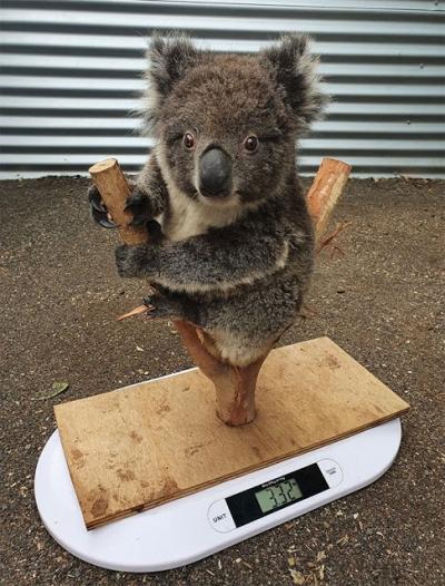 Imagens mostram como animais diferentes são pesados