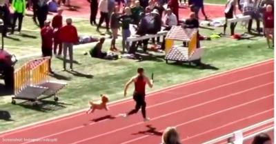 Cachorro entra em corrida de 100 m e ganha ela!