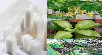 DIABETE | Planta Saião, Flor de Mamão ,Chá Para Diabetes e Insulina