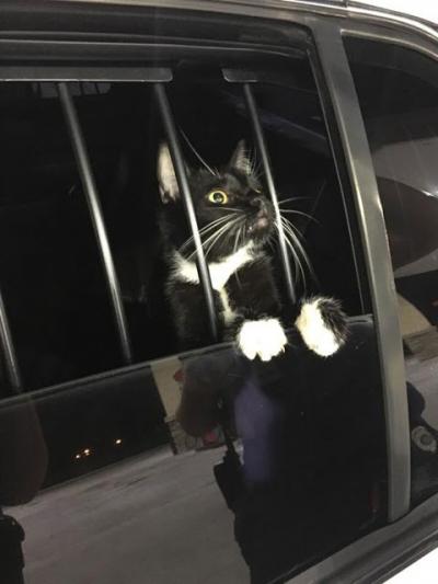 Gato é 'preso' suspeito de roubo nos EUA