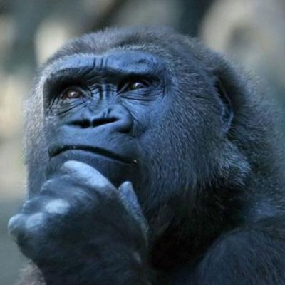 Os animais têm consciência?
