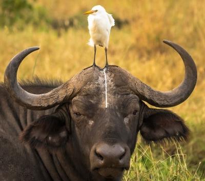 As fotos mais engraçadas da Vida Selvagem