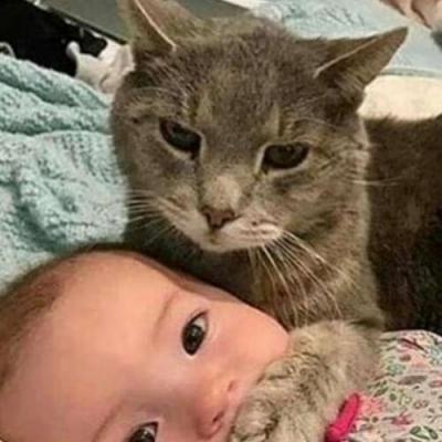 Escute o gato!
