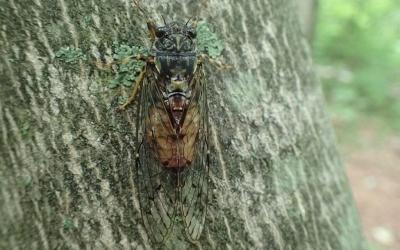 Novo avanço na pesquisa de antigos exoesqueletos de insetos