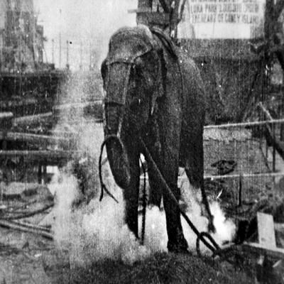 Topsy, elefanta que morreu eletrocutada para difamar a corrente eletrica alterna