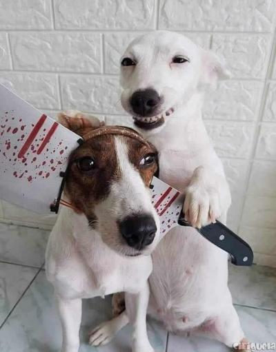 Quando seu cachorro é meio psicopata