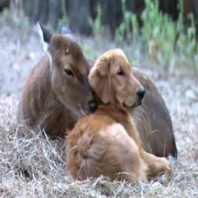 Conheça 6 animais com seus próprios animais de estimação