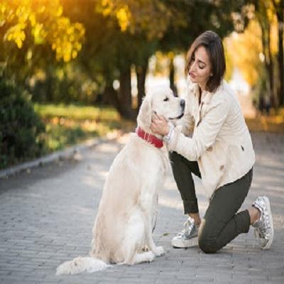 Cães amam os donos como se fossem de sua própria família?