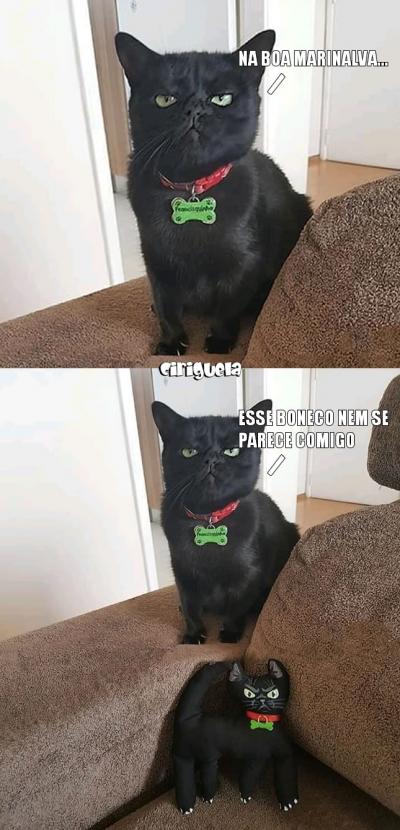 Quando o gato recebe um boneco de pelúcia