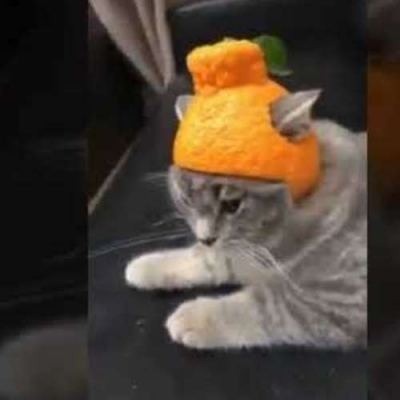 Um gato com Orange Helmet
