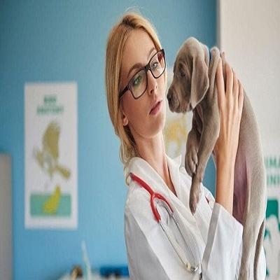 6 Tipos de virose em cachorro: veja os sintomas