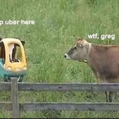 Greg está doido