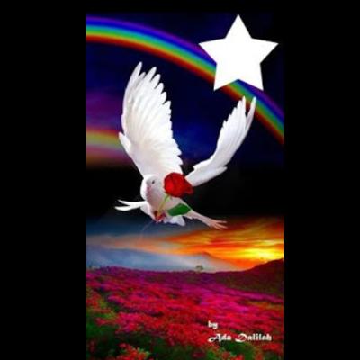 Paz não é apenas a ausência de guerra.Entenda!