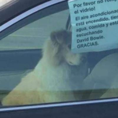 Não salve o cachorro!