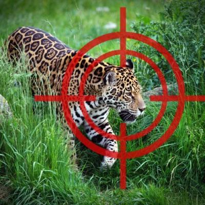 O que nós perdemos quando espécies são extintas?