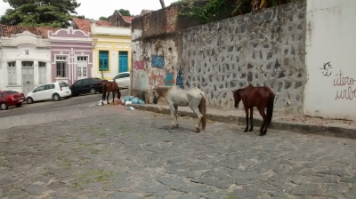 Animais soltos pelas ruas de Olinda