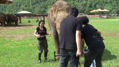 Elefante interrompe entrevista de sua amiga