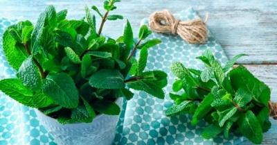 Quais os benefícios e como fazer o chá de erva-cidreira