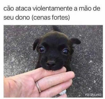 (Cenas Fortes) Cão ataca violentamente a mão de seu dono