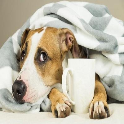Pets sentem frio? Da roupa à caminha, veja os cuidados que você precisa ter com