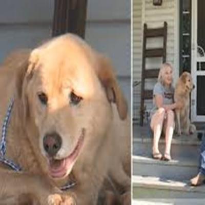 Cão que estava desaparecido aparece a 100 quilômetros na antiga casa da família