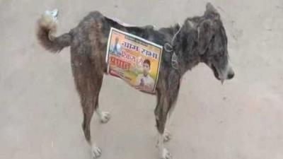 Vote em mim: Cães de rua são usados como