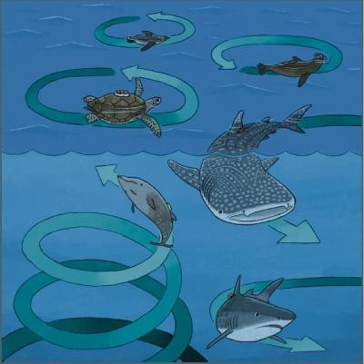 Comportamento enigmático de nado circular em baleias, tubarões e tartarugas