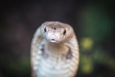 Zoológico faz sessão de fotos de naja que picou estudante