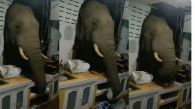 Elefante invade cozinha a procura de comida na Tailândia