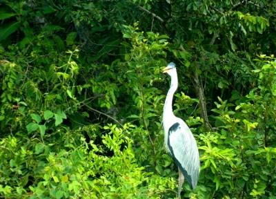 Saiba como é um safári ecológico no Pantanal