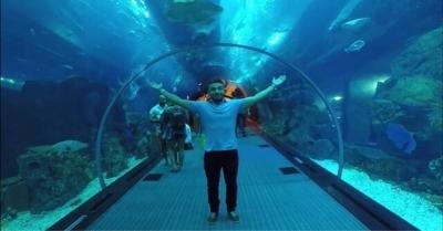 5 aquários mais incríveis do mundo
