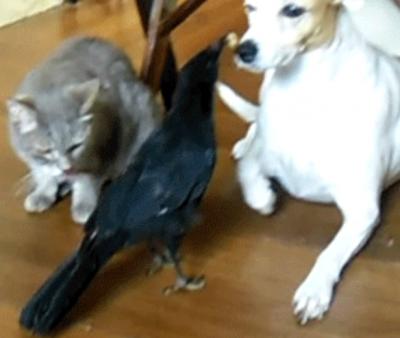 Gatos, eles não seguem regras