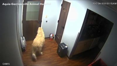 Cachorrinho esperto planeja fuga da prisão