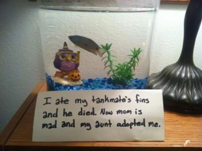 22 peixinhos que sofreram shaming