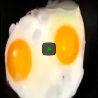 Quando você acha que já viu de tudo, surge um ovo cantando rap