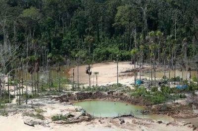 Cientistas discutem devastador custo da ação humana no planeta