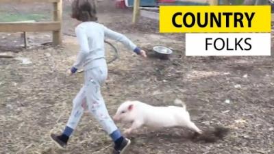 Assista uma coletânea dos vídeos mais divertidos de animais de fazenda