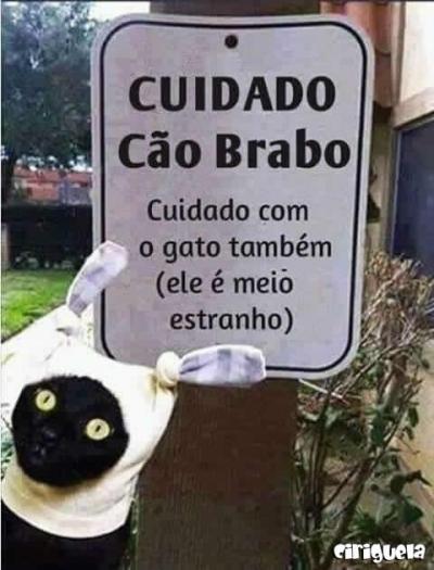 Cuidado: Cão bravo!!!