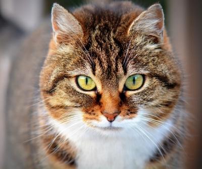 22 gatos entram na justiça contra um condomínio em João Pessoa
