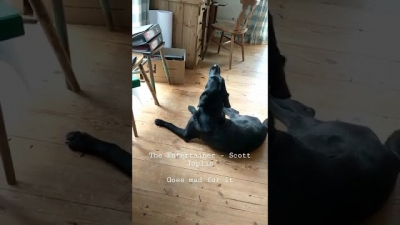 Cachorro se recusa a cantar qualquer música que não seja a dele