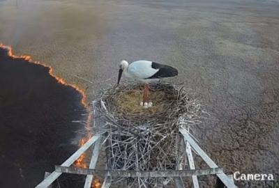 Pássaro ignora incêndio para cuidar de seu ninho