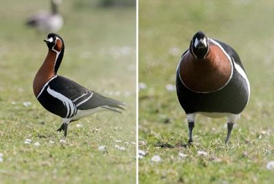 Fotógrafo prova que aves só são bonitas de lado