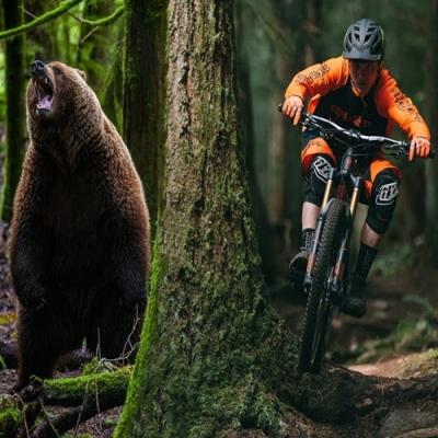 Urso persegue ciclistas em montanha na Eslováquia