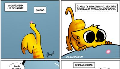Como os gatos são bobos