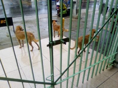 Cachorros com fome e sede