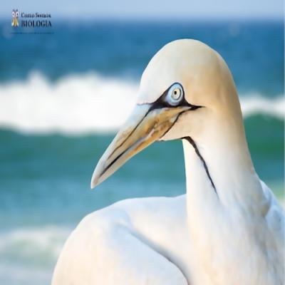 Como aves marinhas sobrevivem tomando água com sal?